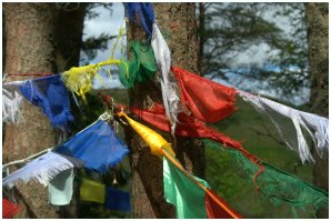 Tree and Flags