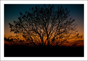 tree-sunset